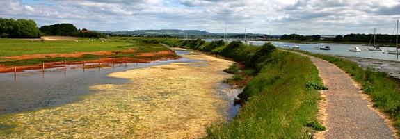 chidham peninsular walk web